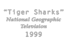 1999-tigersharks