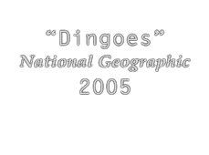 2005-dingoes